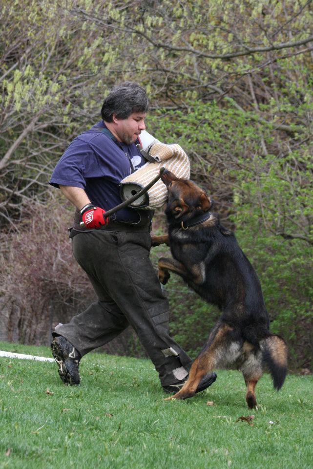 Dog Kennels Mankato Mn